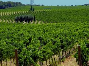 Wein aus Apulien: Mehr als Massenware