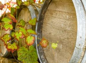 Vom Hang bis in die Flasche: Wie Weinherstellung genau funktioniert