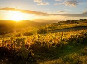Wein aus dem Aostatal: Steile Terrassen im Valle d'Aosta