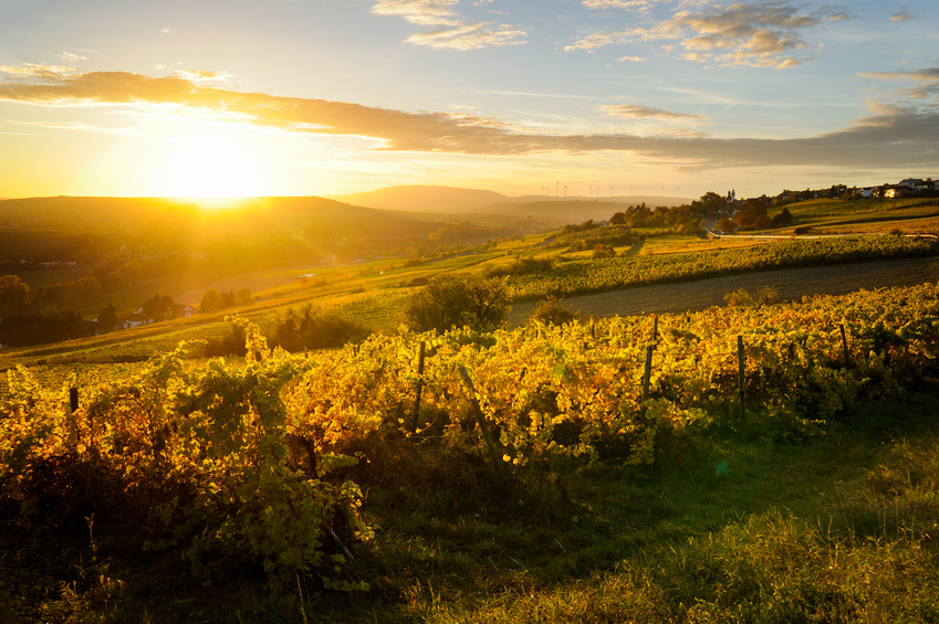 /wp-content/uploads/2017/12/wein-aus-dem-aostatal-steile-terrassen-im-valle-daosta.jpg