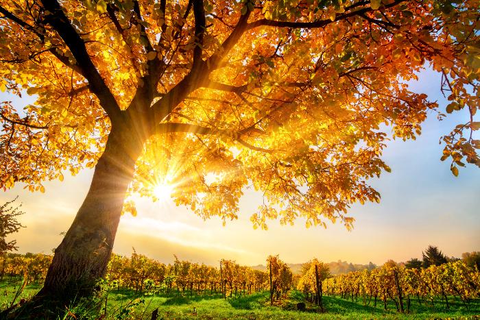 Willkommen im Herbst